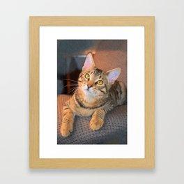 Cute Bengal Kitty Framed Art Print