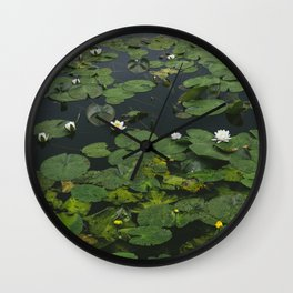 Flower. White Water-lily (Nymphaea alba) growing on a lake. Norfolk, UK.  Wall Clock