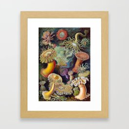Ernst Haeckel Kunstformen der Natur Actiniae Sea Anemones Plate Framed Art Print
