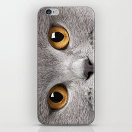 Cat in Grey iPhone Skin