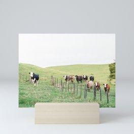 Curious cows | New Zealand travel photography | Rural landscape Mini Art Print