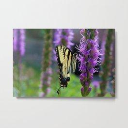 Swallowtail Summer Metal Print