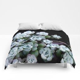 Sedum Clavatum Comforters