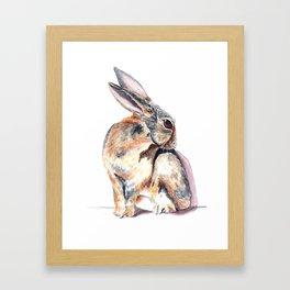 Cottontail Rabbit Framed Art Print