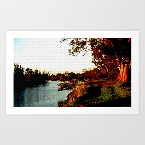 Sunsets on the river bank gum Trees Art Print