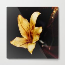 Golden Hour Of Lily Flower Metal Print