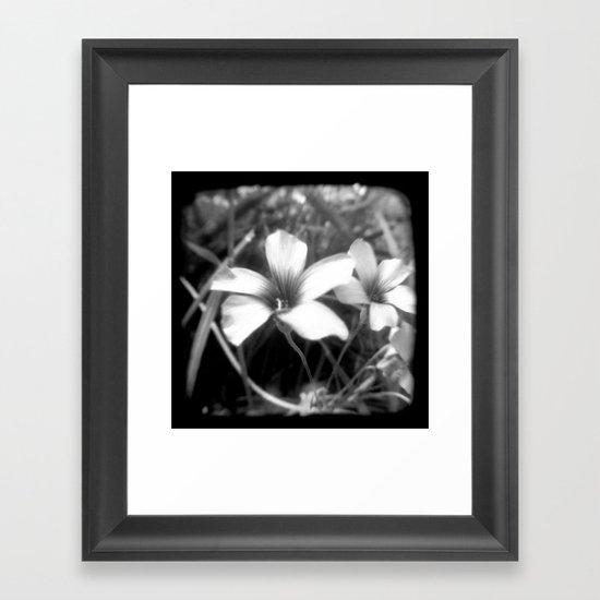 Oxalis - Through The Viewfinder (TTV) Framed Art Print
