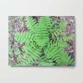 Fern From Above Metal Print
