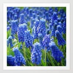 Blue Hyacinths Art Print