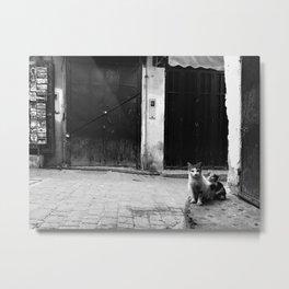 Les Chats de Rabat Metal Print