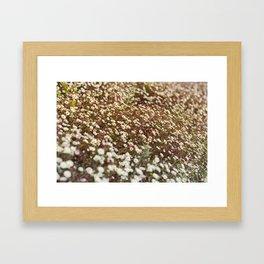 Daisy Fields Framed Art Print
