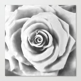 Big White Rose Canvas Print