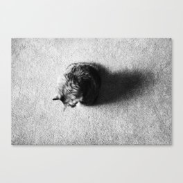 Aesthetic Black And White Cat 2 Canvas Print