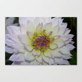 Dahlia Pastel Tones Canvas Print