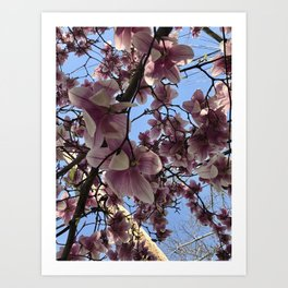 A Sky Full of Cherry Blossoms Art Print