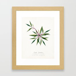 Crab Grass Modern Botanical Framed Art Print
