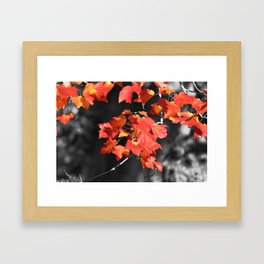 Cold Fall Framed Art Print