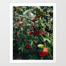 Red Floral III Art Print