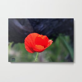 Poppy Flower Metal Print