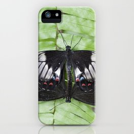 Mating Swallowtail Butterfly iPhone Case
