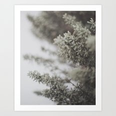 Winter Nature Photography Art Print