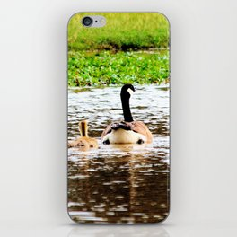 Canada Goose and Goslings II iPhone Skin