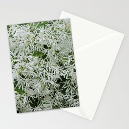 TEXTURES: White on Green Stationery Cards