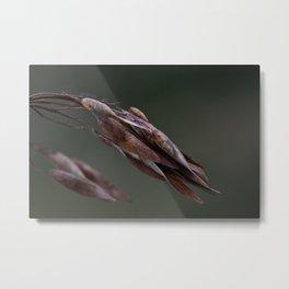 Seed Pods Metal Print