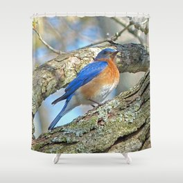 Bluebird in Tree Shower Curtain