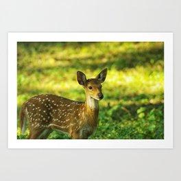 Little Bambi Deer Art Print