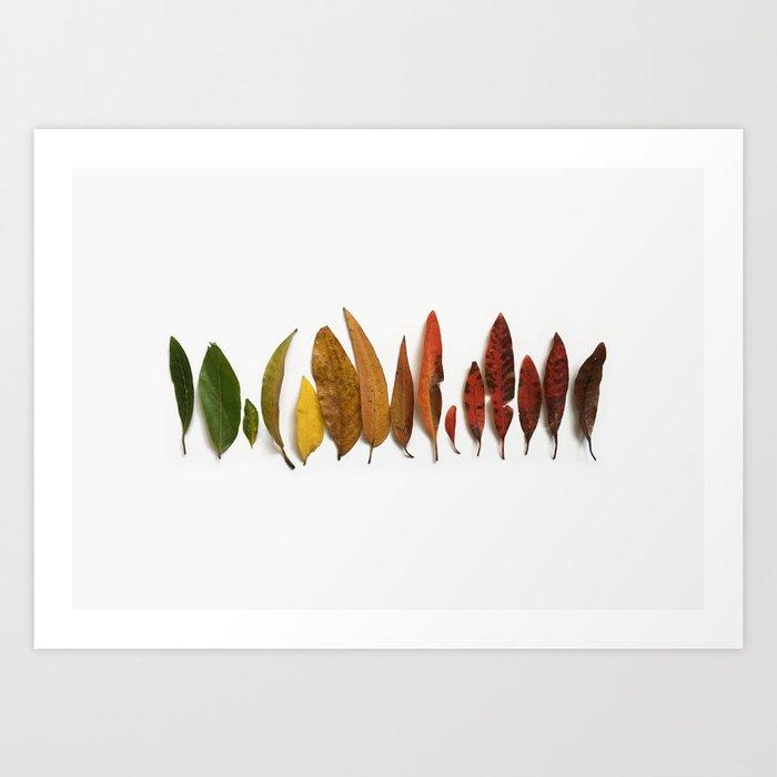 Australian Rainbow Leaves Art Print