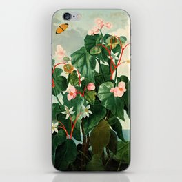 Pink Floral The Oblique-Leaved Begonias : Temple of Flora iPhone Skin