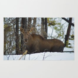 Moose calf in the snow, Canadian Rockies Mountains Rug
