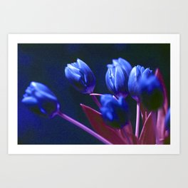 DARK BLUE TULIPS Art Print