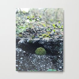 Forest finds Metal Print