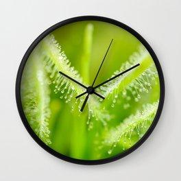 Green leaves of sundews Wall Clock
