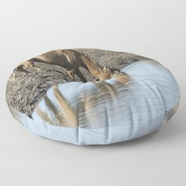 Reflection of a Stallion Floor Pillow