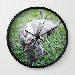 Pit Bull Puppy Wall Clock