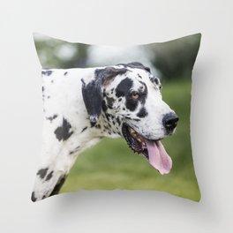 Harlequin Great Dane in Grass Yard Throw Pillow