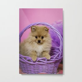 Tan Pomeranian Puppy Sitting in a Purple Basket with Purple Floral Decorations and a Pink Background Metal Print