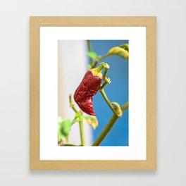 Red Pepper Boot Framed Art Print