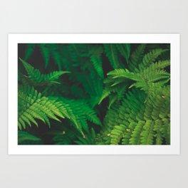 Garden Greens Art Print