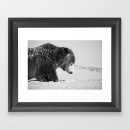 Alaskan Grizzly Bear in Snow, B & W - I Framed Art Print