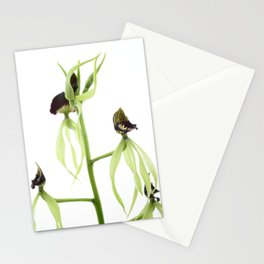 Dancing orchid Pulpito serie 2/5 Stationery Cards
