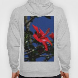 red hibiscus on dack blue Hoody