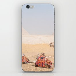 Camel at Pyramids of Giza Egypt Cairo iPhone Skin