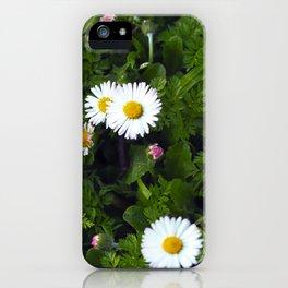 Margaritas-Daisies iPhone Case