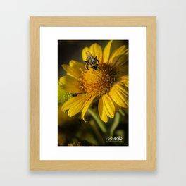 Gathering Pollen Framed Art Print