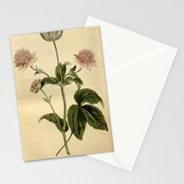 Flower 1553 astrantia maxima Hellebore leaved Master Wort10 Stationery Cards