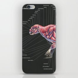 Arctodus Simus Muscle Anatomy iPhone Skin